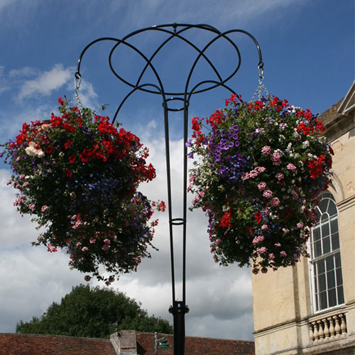 Picture of Hanging Baskets in Westbury