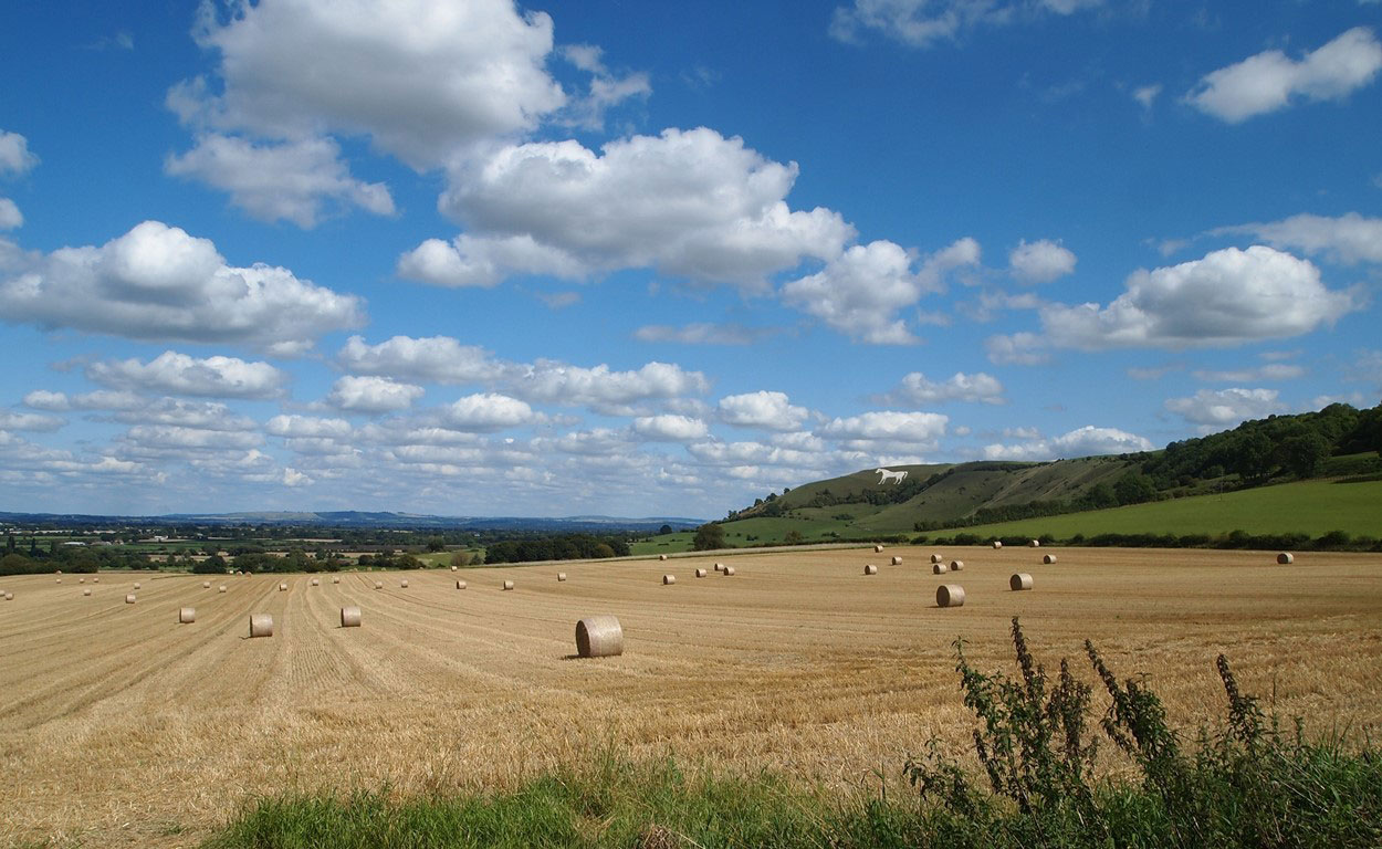 Westbury Haybales by Andrew Pyne